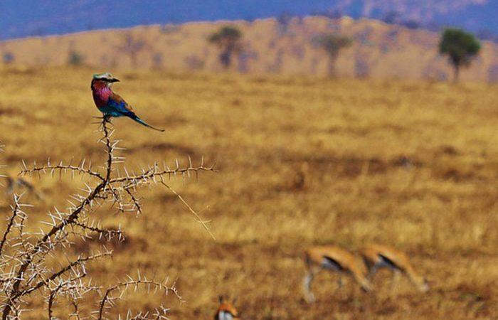 2-days-tanzania-camping-safari