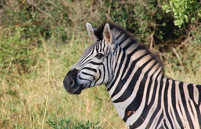 2-days-tanzania-lodge-safari