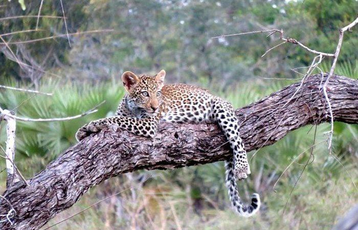 3-days-tanzania-lodge-safari