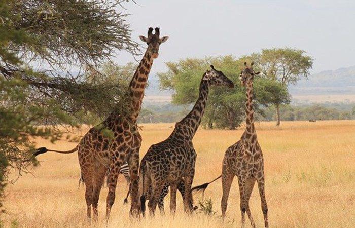 Tanzania-camping-safari-4-day