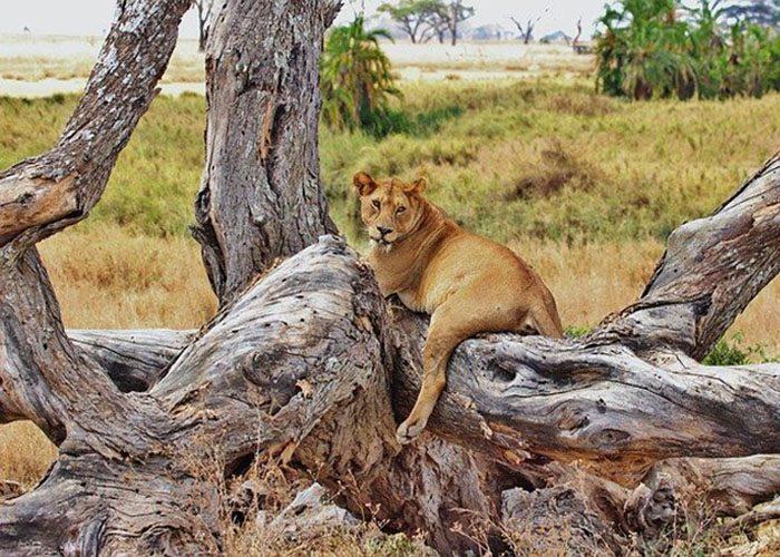 4-days-tanzania-lodge-safari