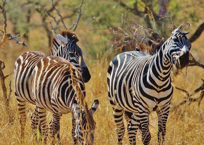 5-Days-Tanzania-Camping-Safari